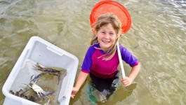 Lucy spent an afternoon crabbing with her Dad.  She had a great time scooping up the crabs in the net, and loved having her father all to herself.  She was less than impressed when she realised that the crabs were going to be cooked up for dinner.
