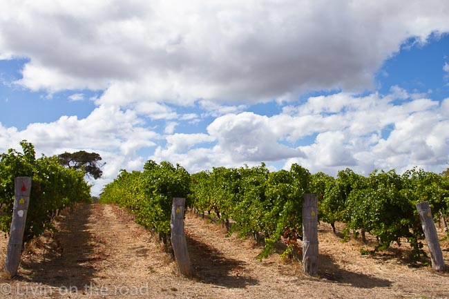 Travel blog wineries